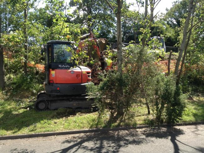 Some of the trees being felled in Penketh