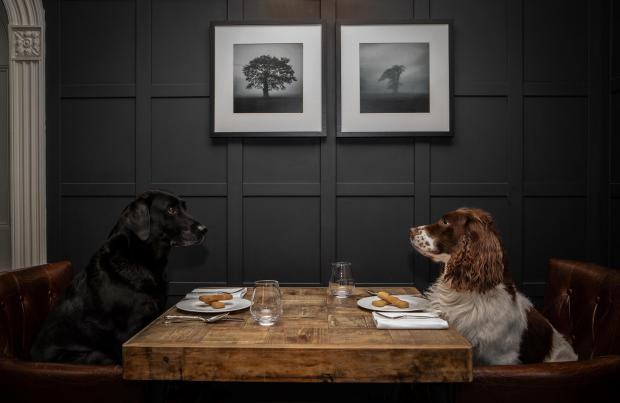 Warrington Guardian: Dogs can dine in the hotel's Brathay lounge. Picture: Polly Baldwin
