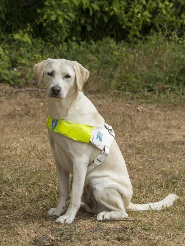 Cathie the guide dog