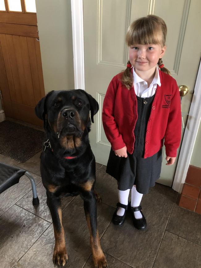 Harper Hanley age 5 Year 1 - Stockton Heath Primary School Best pal Rottweiler Otis