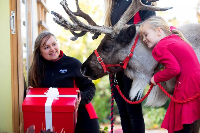 Win the chance for a real reindeer to deliver Frozen II goodies