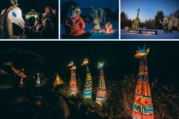 The Lanterns return this Christmas at Chester Zoo.