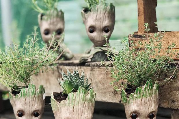 Groot planters are selling fast