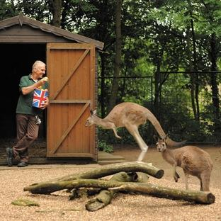 Warrington Guardian: Keeper Graham Chilton with Australian kangaroo and Herefordshire apples.