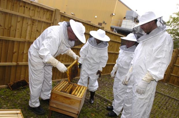 Staff inspect the honeycomb