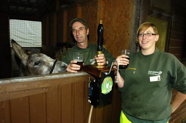 Donkey enjoys new brew