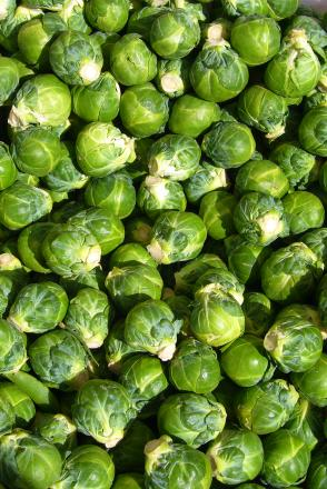 World record attempt to eat Brussels sprouts in Warrington today