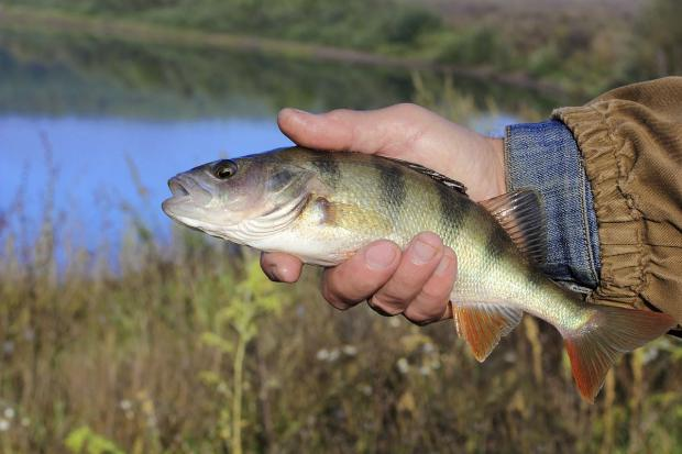 Fish spawning puts waters off limits