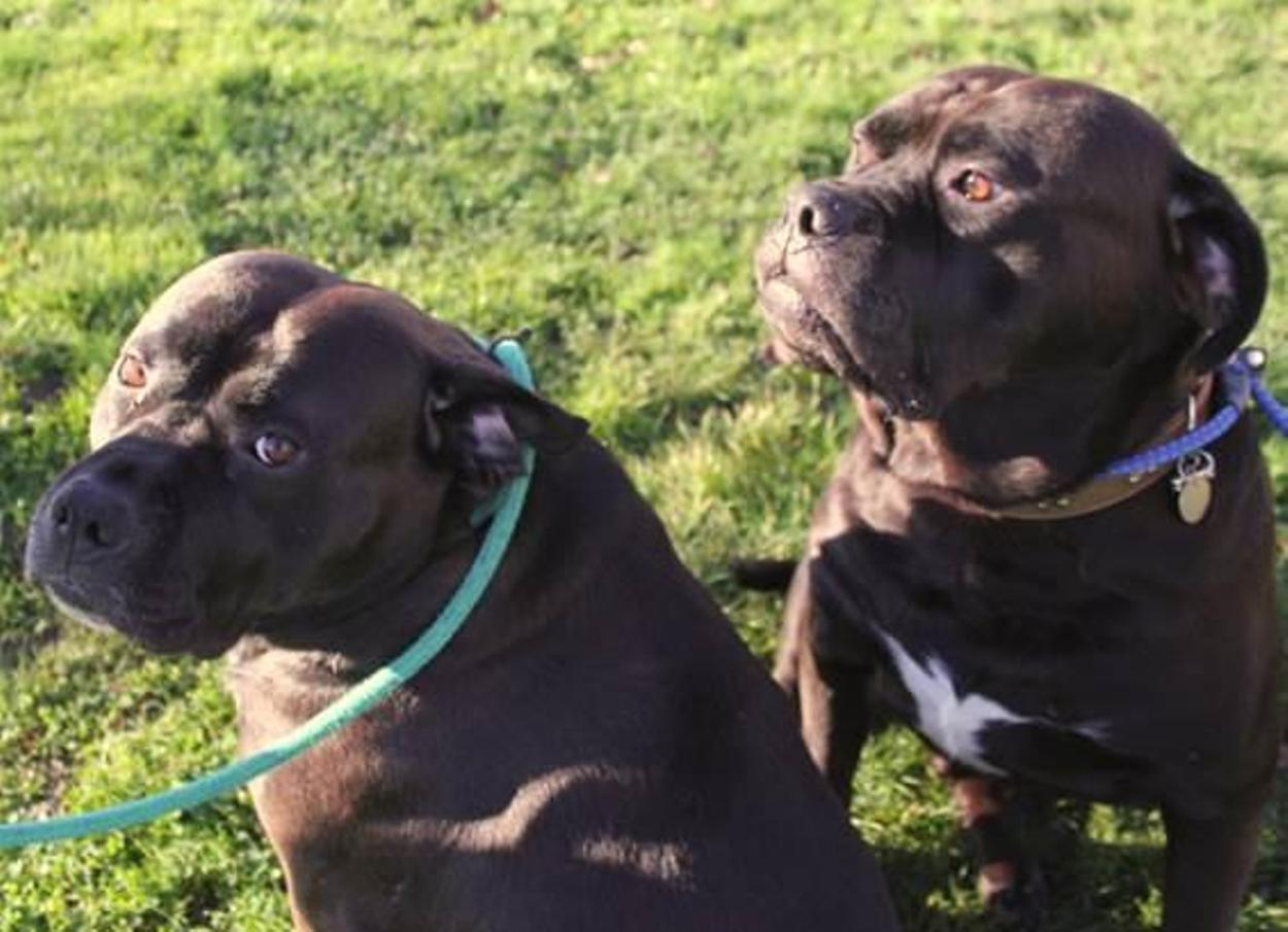 These two Cheshire Dogs Home pets need a new home