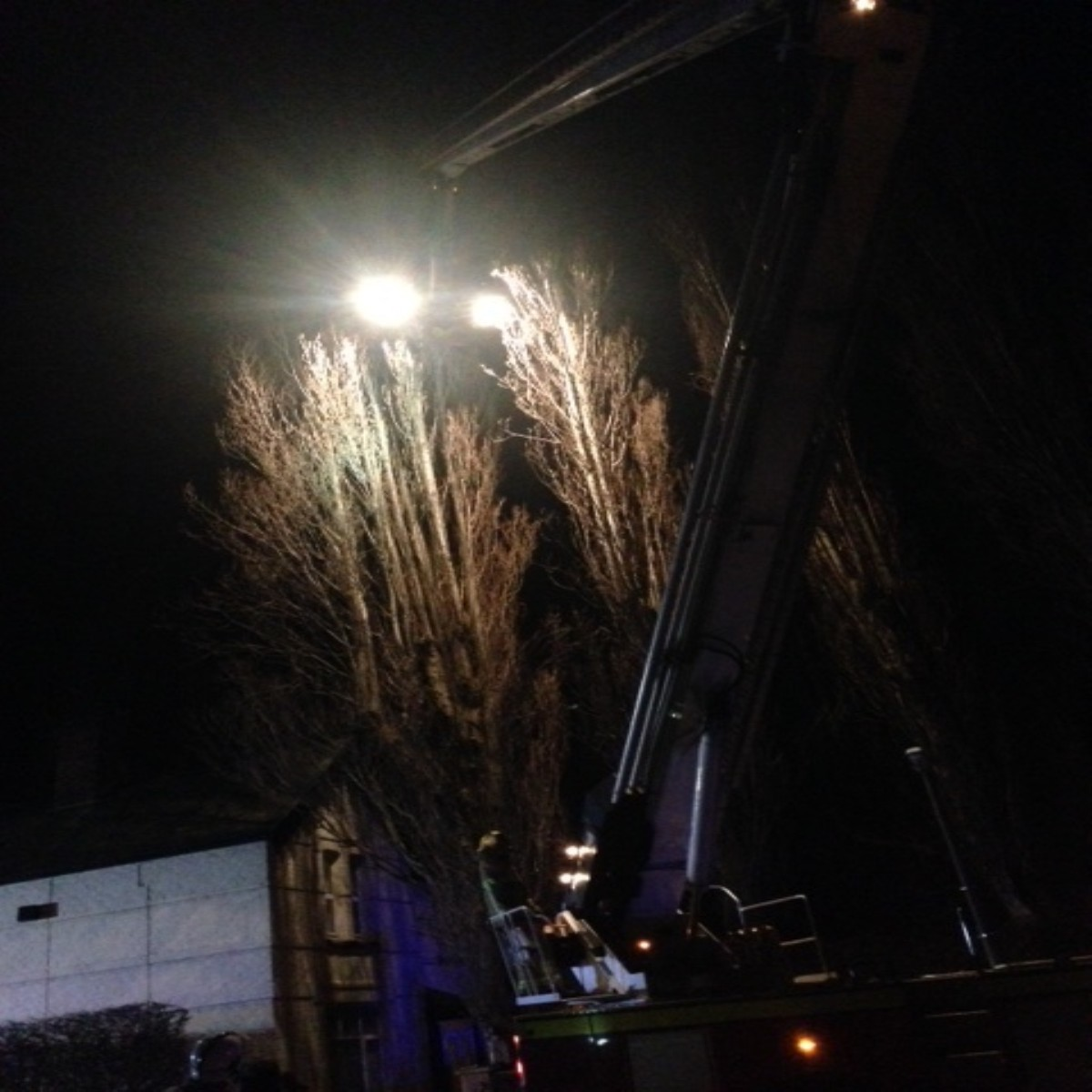 UPDATED: Fire crews help Penketh man stuck up 60ft tree rescuing cat