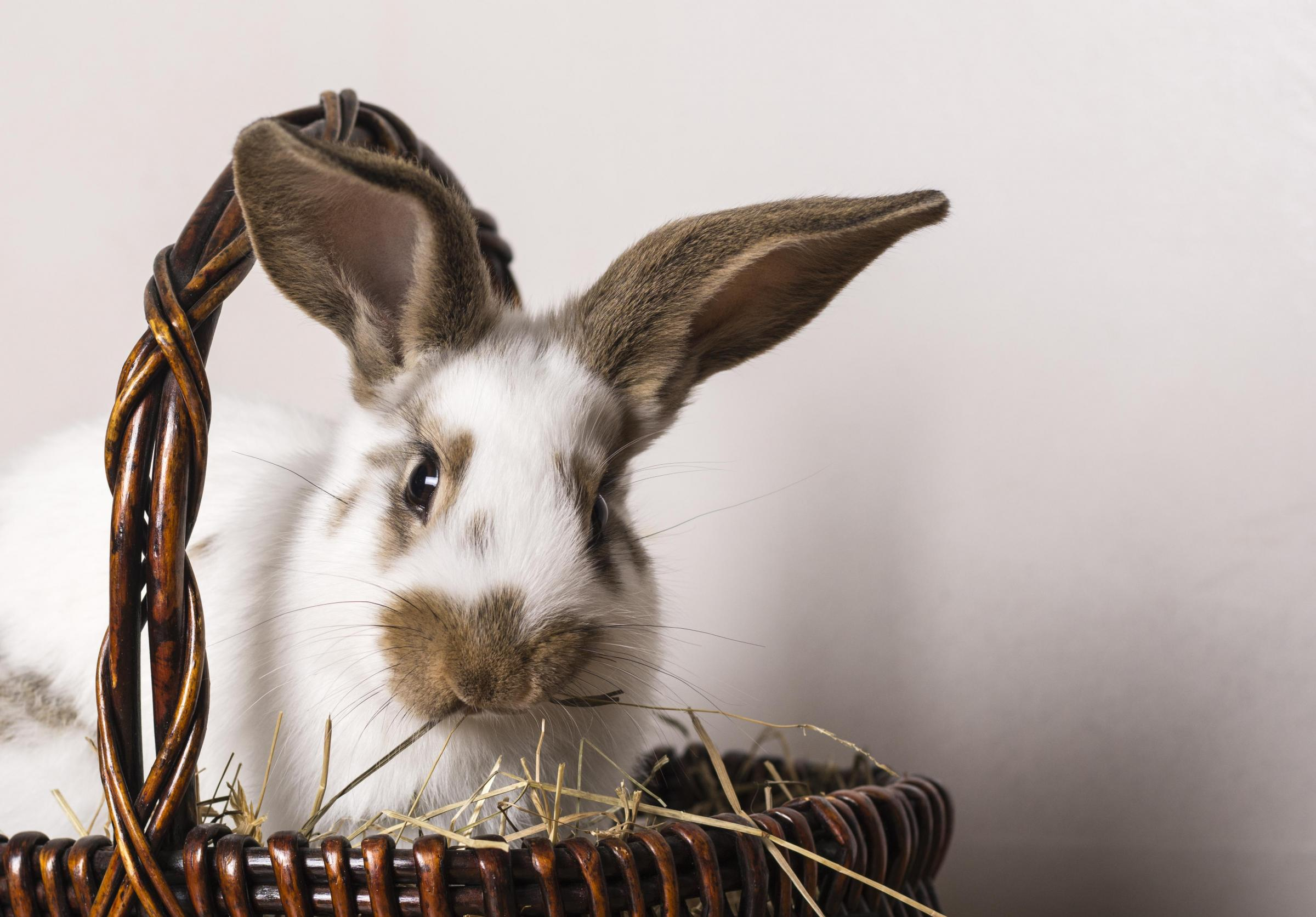 Our top five rabbits looking for good homes this Easter