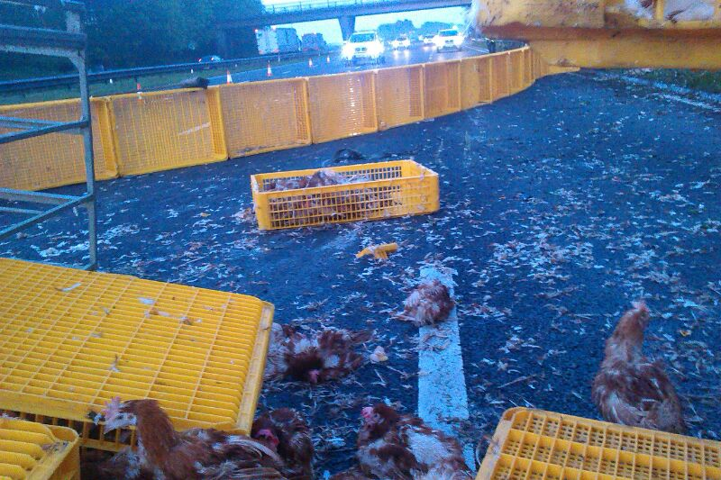 M62 chickens get the town clucking