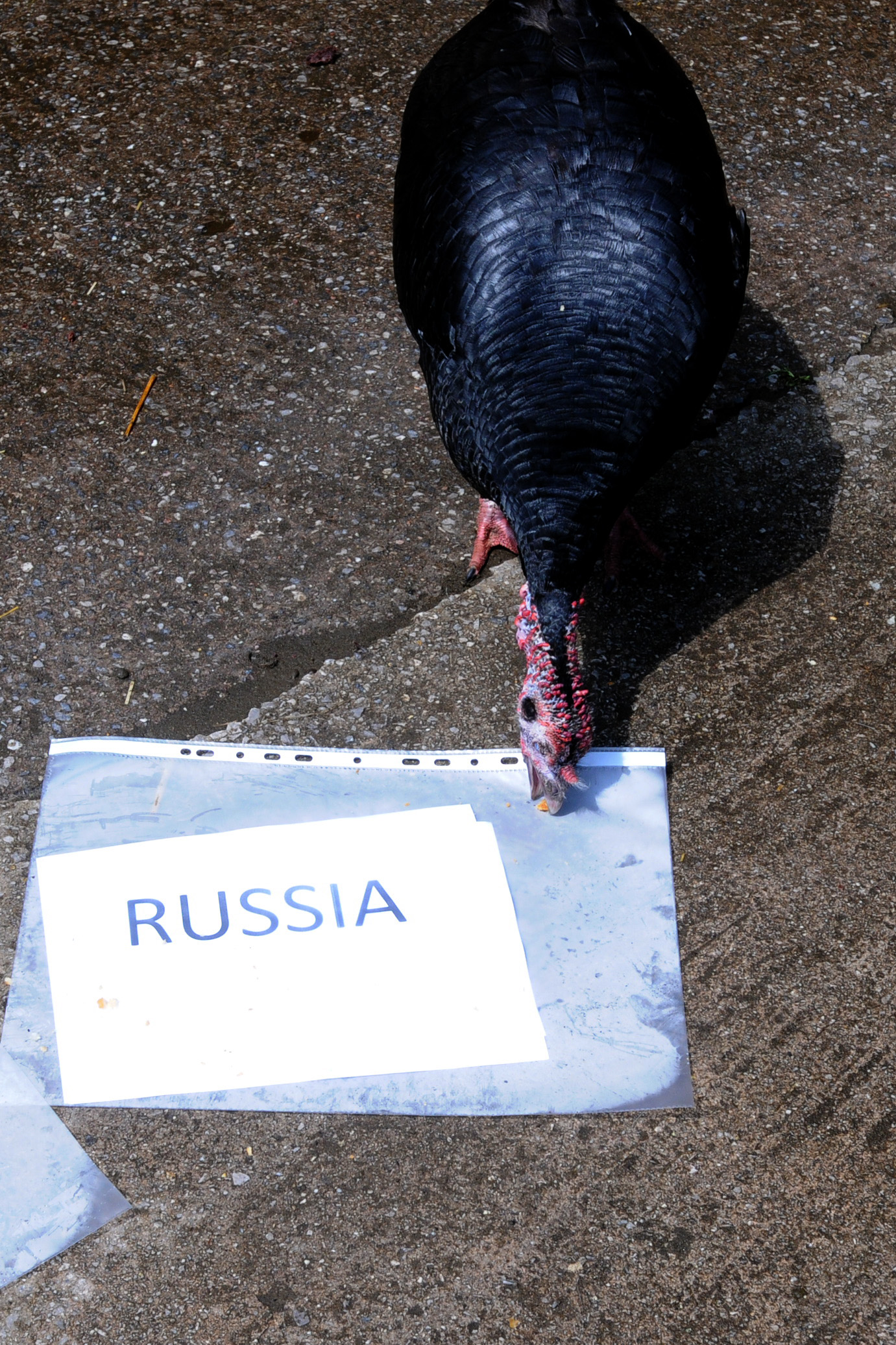 Margaret pecking out Russia