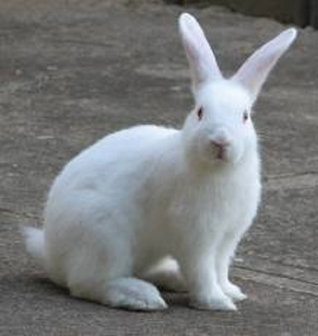 Vet issues rabbit disease warning
