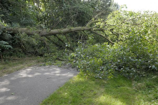 Collapsed tree in on Black Bear Canal Path