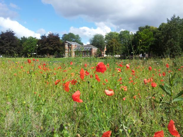 POPPIES at Bank Park pay a poignant reminder to those who lost their lives in the centenary of the First World War.Mike Bromwich, of Landseer Avenue, Lower Walton, took this picture with the Town Hall offices in the background.If you have a picture that y