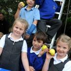 Warrington Guardian: from top Matthew Hill, Samuel Grey, Olivia James, William Girdharry and Isobelle Wilson picking apples mbaa031014