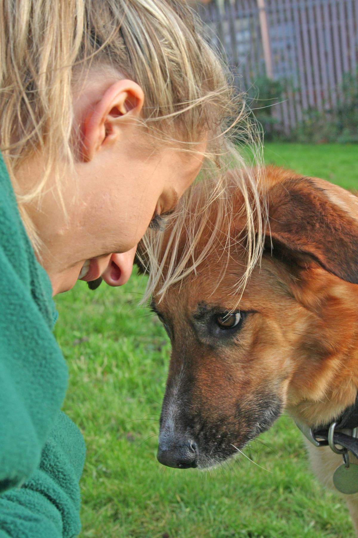 Choosing the right rescue dog for you is a very important decision.