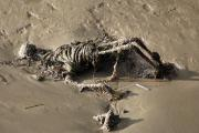 An image of the eerie discovery made on the banks of the Thames in Gravesend yesterday. Photo: London News Pictures