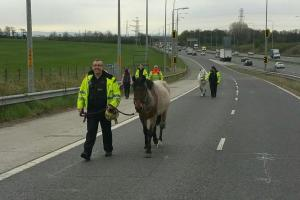 Two horses rescued after escaping on to M6 slip road