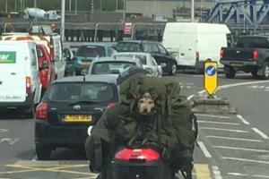 Motorcycling dog in a bag takes Woolwich ferry - but is he being ruff-ly treated?