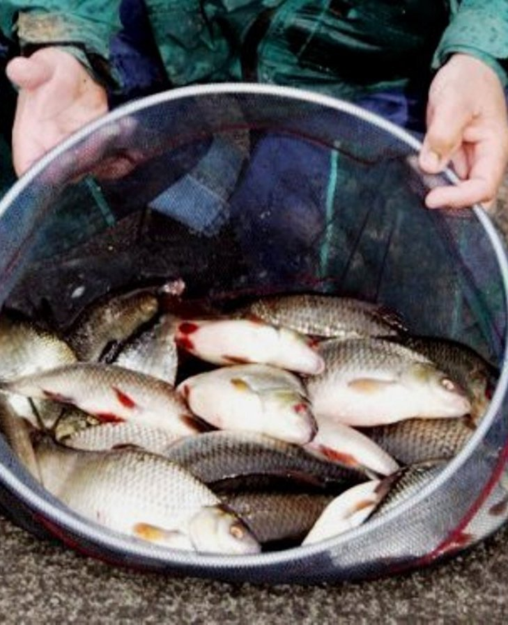 Warrington Anglers' Association report