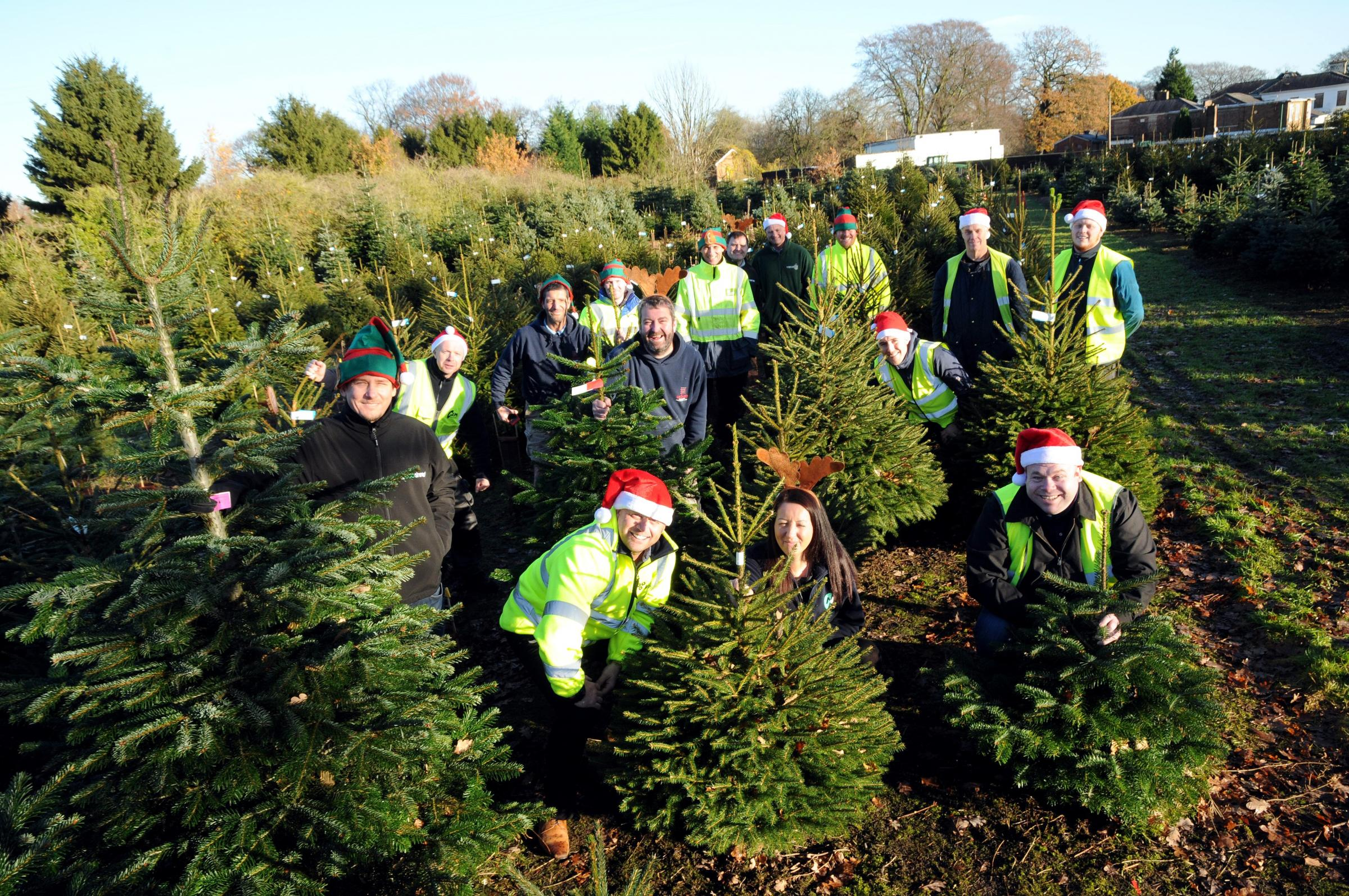 How to book a collection for your used real Christmas tree and raise money for Rocco's