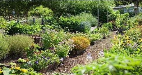 Bents\' plans to open apothecary garden with 200 culinary herbs and ...