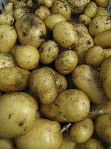 Warrington Guardian: Fixed prices: Charging customers too much for potatoes could land you in court SUBMITTED spuds-may-02