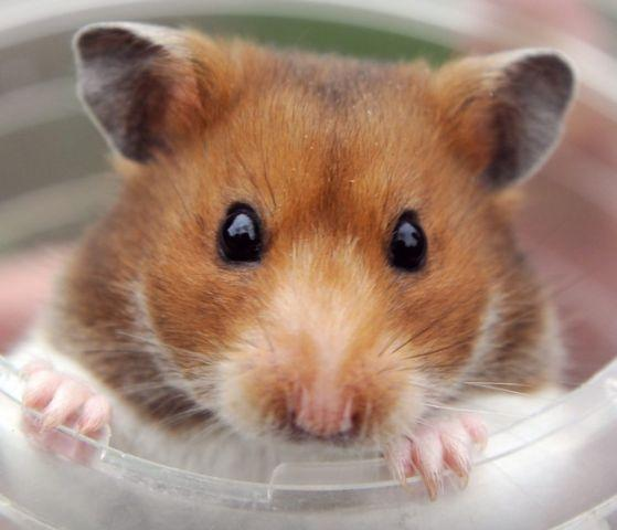 'My hamster ate my post'  (and other bizarre excuses for not doing tax returns)