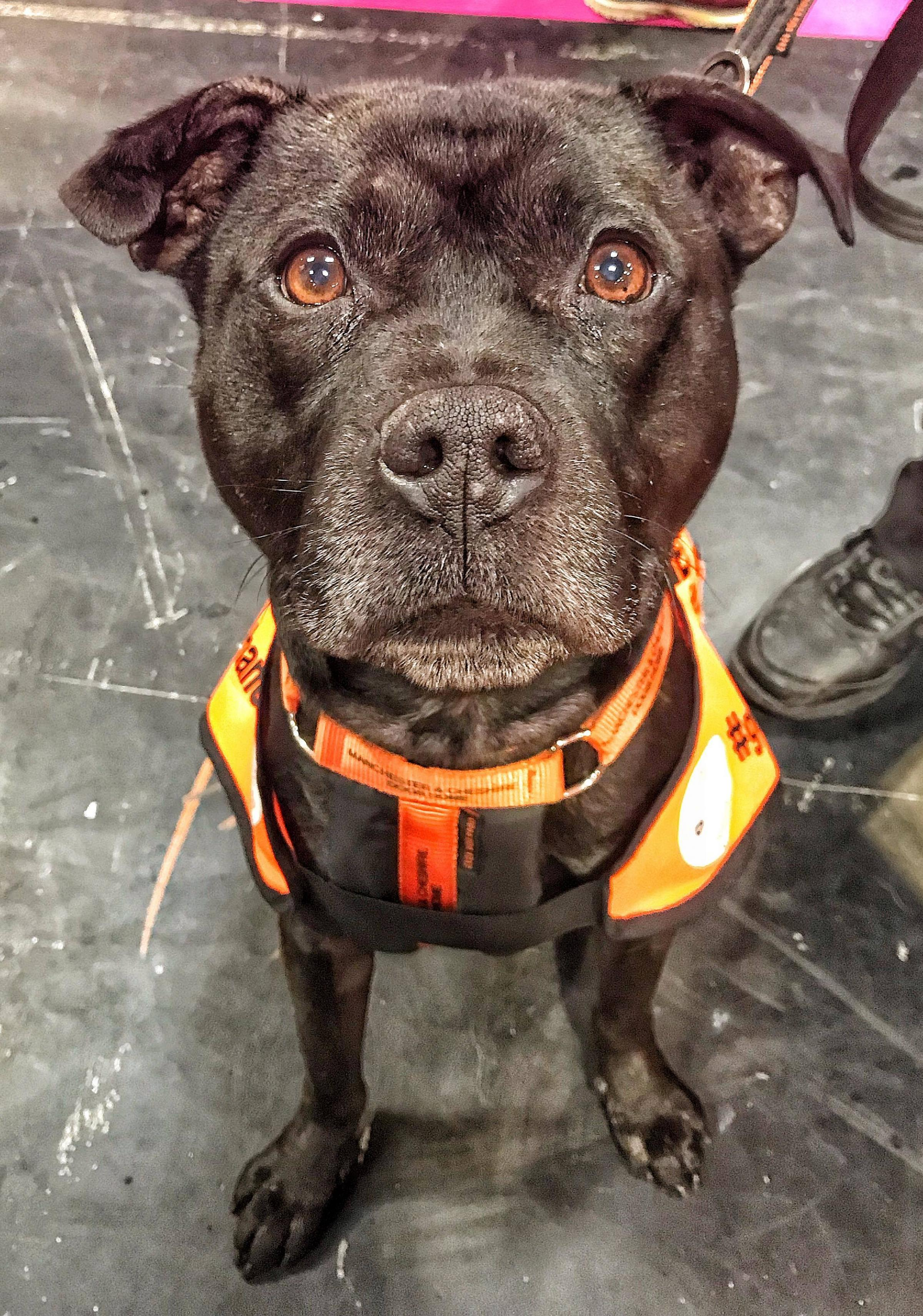 This Grappenhall rescue dog took part at Crufts